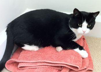 Cat enjoying Towel Day
